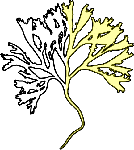 Karragentång